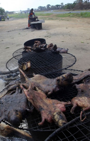 A woman dries bushmeat near a road of the Yamoussoukro highway on March 29, 2014. Bushmeat - from bats to antelopes, squirrels, porcupines and monkeys - has long held pride of place on family menus in West and Central Africa, whether stewed, smoked or roasted. Experts who have studied the Ebola virus from its discovery in 1976 in Democratic Republic of Congo, then Zaire, say its suspected origin - what they call the reservoir host - is forest bats. Links have also been made to the carcasses of freshly slaughtered animals consumed as bushmeat. (REUTERS/Thierry Gouegnon)