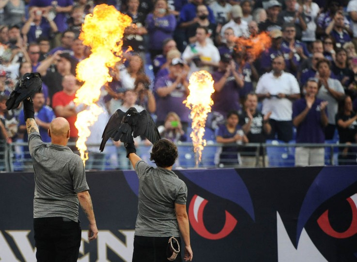 Ravens are held next to the fire and smoke before the Ravens game against the San Francisco 49ers at M&T Bank Stadium on August 7, 2014. (Rachel Woolf/Baltimore Sun)