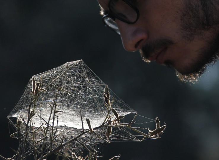 A scout inspects a spider web in Jezzin, south Lebanon August 16, 2014. REUTERS/Ali Hashisho