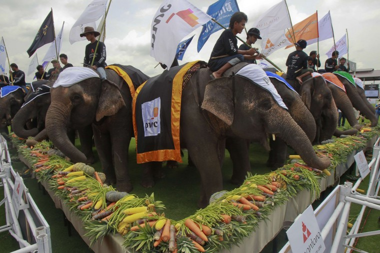 Elephants eat fruit and vegetables during the 2014 King's Cup Elephant Polo Tournament in Samut Prakan province, on the outskirts of Bangkok August 28, 2014. A total of 16 international teams and 51 Thai elephants are participating in the tournament that runs from August 28-31. (Chaiwat Subprasom/Reuters)