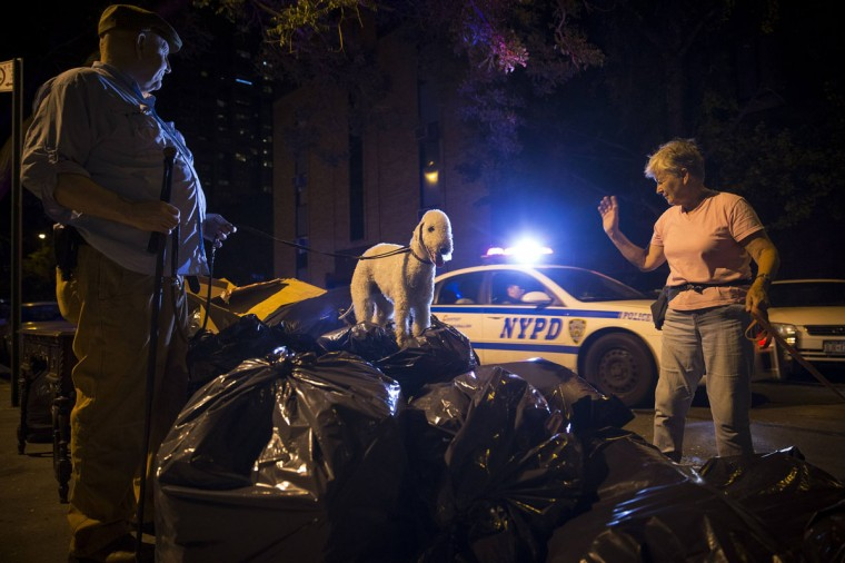 A New York City Police patrol car passes as Richard Reynolds, (L) founding member of the Ryders Alley Trencher-fed Society (R.A.T.S) looks on and his Bedlington Terrier, Catcher, stands on a pile of garbage bags during an organized rat hunt in New York City July 25, 2014. The Ryders Alley Trencher-fed Society (R.A.T.S.) is a group of enthusiasts who take their dogs out to hunt rats in New York City. Members of the independent group venture out on night-time excursions to allow their dogs to do what they do best: hunt and kill vermin. (Mike Segar/Reuters)