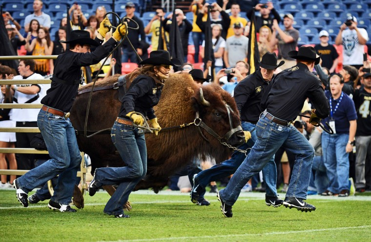 Colorado Buffaloes mascot Ralphie is brought out onto the field before the game against the Colorado State Rams at Sports Authority Field at Mile High. (Ron Chenoy/USA Today Sports)