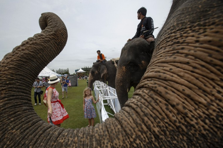 A child stands near elephants during a match the 2014 King's Cup Elephant Polo Tournament in Samut Prakan province, on the outskirts of Bangkok. A total of 16 international teams and 51 Thai elephants are participating in the tournament that runs from August 28-31. (Athit Perawongmetha/Reuters)