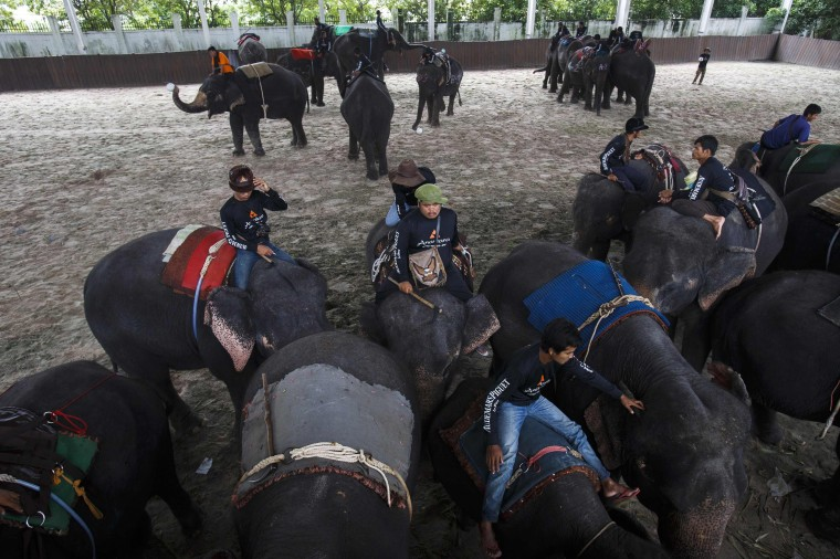 Mahouts and their elephants gather before a match at the 2014 King's Cup Elephant Polo Tournament in Samut Prakan province, on the outskirts of Bangkok. A total of 16 international teams and 51 Thai elephants are participating in the tournament that runs from August 28-31. (Athit Perawongmetha/Reuters)