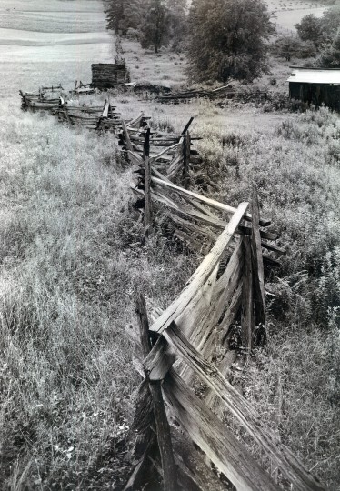 Garrett County provides this example of what is variously designated the worm, snake and zigzag fence. (A. Aubrey Bodine/Baltimore Sun/September 4, 1949)