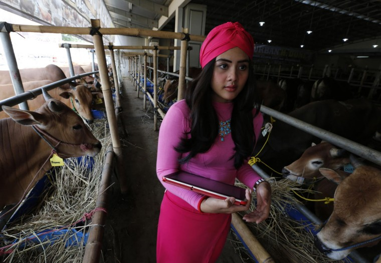 A salesgirl waits for customers as she sells cows for the upcoming Eid al-Adha festival at a cow showroom in Depok, outskirt of Jakarta, September 30, 2014. The cow showroom has adopted a unique way of selling cattle for Eid al-Adha by employing salesgirls to attract customers. According to the owners of the showroom, this has led to an increase in sales since they started employing salesgirls three years ago, having sold around 400 cattle in 2012, 440 in 2013 and 510 this year. Many Muslims around the world will commemorate Eid al-Adha by sacrificing cattle and distributing the meat to the poor. (REUTERS/Beawiharta)