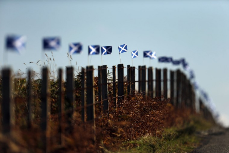 Scottish Saltire flags fly from fence posts near Portree on the Isle of Skye on September 17, 2014. (REUTERS/Cathal McNaughton)