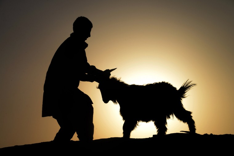An Afghan man leads a goat ahead of the sacrificial Eid al-Adha festival at the animal market during sunset on the outskirts of Herat on October 2, 2014. Muslims across the world are preparing to celebrate the annual festival of Eid al-Adha, or the Festival of Sacrifice, which marks the end of the Hajj pilgrimage to Mecca and commemorates Prophet Abraham's readiness to sacrifice his son to show obedience to God. (Aref Karimi/Getty Images)