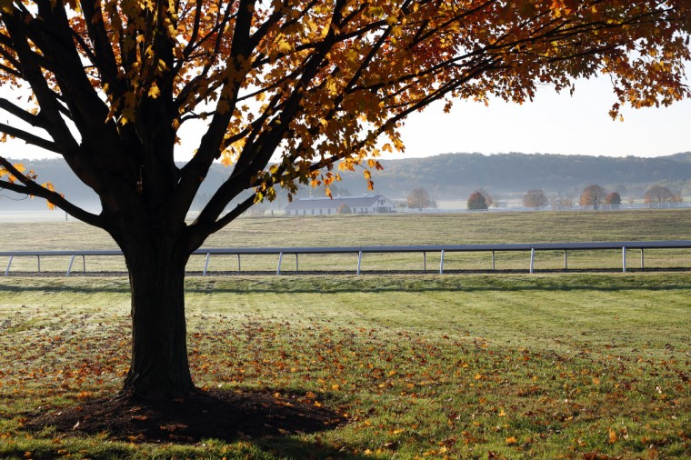 Leaves change color and begin to drop a blanket of orange in the pastures of Sagamore Farm in Glyndon, Md. Cassidy Johnson/Baltimore Sun