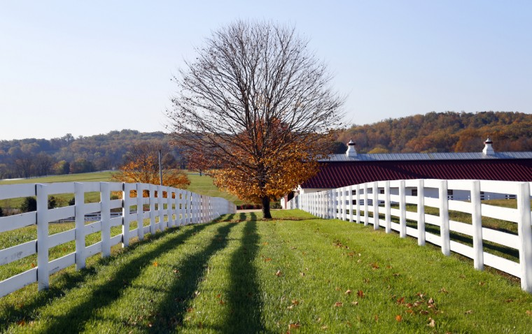 Fall colors contrast against the white fences of Sagamore Farm in Glyndon, Md. Cassidy Johnson/Baltimore Sun