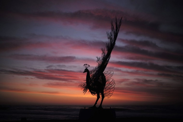 """A peacock sculpture by Byeong Doo-moon titled 'Our memory in your place' is shown before sunrise as part of the """"Sculpture by the Sea"""" exhibition at Sydney's Tamarama Beach on its opening day October 23, 2014. (Jason Reed/Reuters)"""