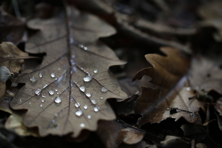 Rain drops are pictured on a fallen autumn leaf in Vertou near Nantes, October 21, 2014. (REUTERS/Stephane Mahe)