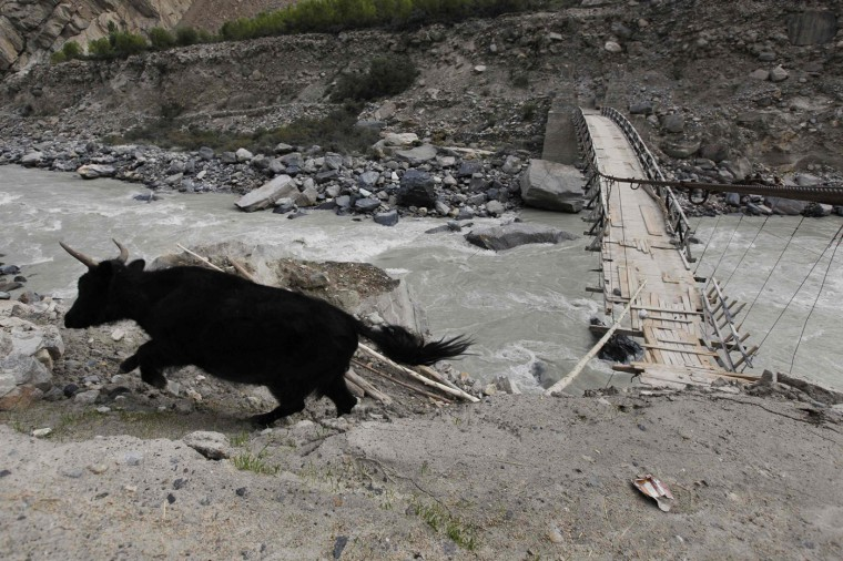 A cow runs after crossing a rope bridge over the glacial Braldu River near the village of Askole in the Karakoram mountain range in northern Pakistan September 12, 2014. (Wolfgang Rattay/Reuters)