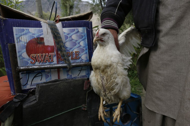 Porter Hassan Gab Khor holds a live chicken before a K2 Base Camp trek in the Karakoram mountain range in northern Pakistan August 28, 2014. A local porter receives 700 Pakistani Rupee ($6.8) per day and usually carries 25 kg. Owners of mules can earn three times as much, as their animals carry 75kg. (Wolfgang Rattay/Reuters)