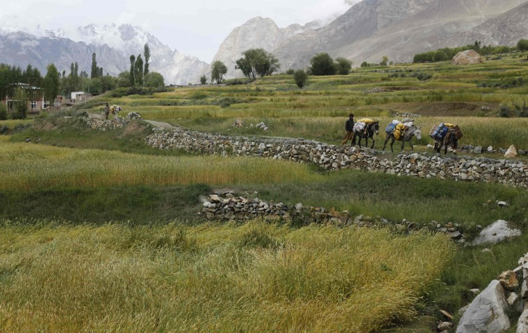 Porters guide their mules outside the village of Askole in Pakistan August 28, 2014. A local porter receives 700 Pakistani Rupee ($6.8) per day and usually carries 25kg. Owners of mules can earn three times as much, as their animals carry 75kg. (Wolfgang Rattay/Reuters)