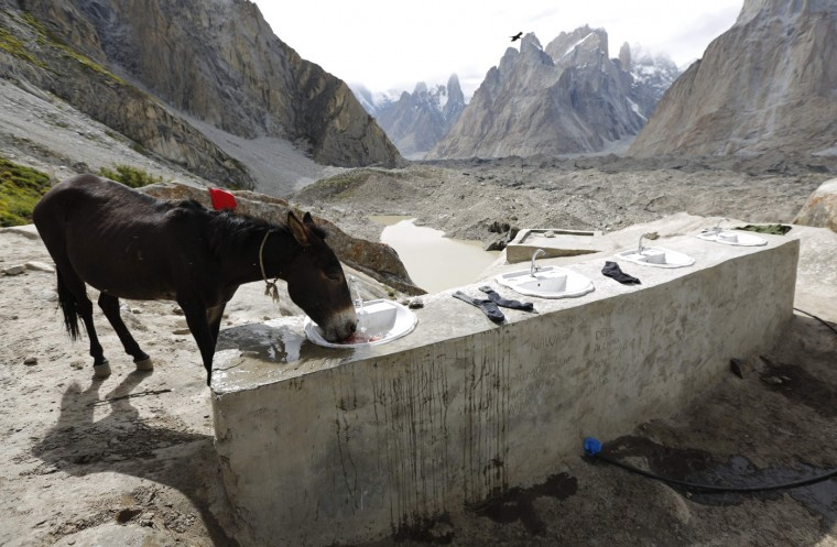 A mule drinks from a basin at a washing place for porters and trekkers at Khoburtse along the K2 base camp trek in the Karakoram mountain range in Pakistan September 1, 2014. A mule can cost between 120,000 and 150,000 Pakistani Rupees (around $1,100 - $1,400) and can earn around $20 per working day for its owner. (Wolfgang Rattay/Reuters)