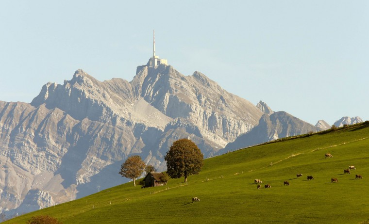 Cows stand on a meadow on a mountain in front of Mount Saentis (2502 metres/8209 feet above sea level) during sunny autumn weather near the eastern Swiss town of Wattwill October 9, 2014. (Arnd Wiegmann/Reuters)