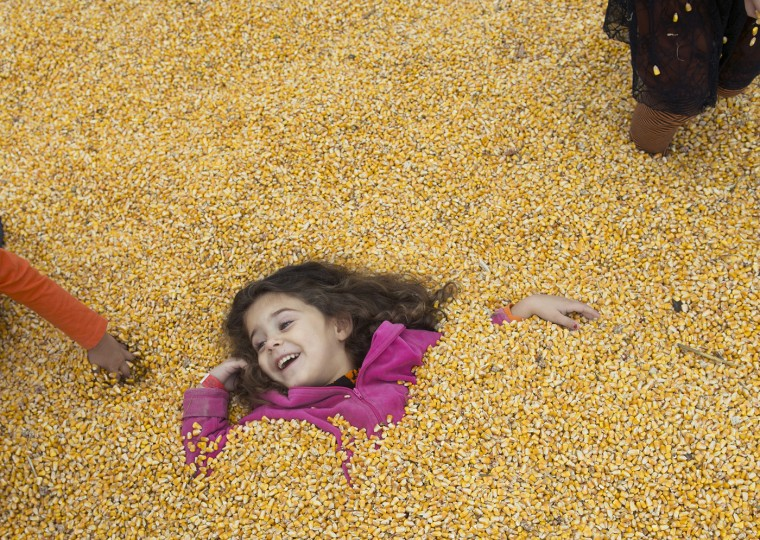 Katy Tyson and her friends play in a big box of corn at the Greenstreet Gardens Fall Festival in Lothian, Md. The family event runs through the weekend of Oct. 25-26. Stand-alone photo. Illustrates AUTUMN (category l), (c) 2014, The Washington Post. Moved Tuesday, Oct. 14, 2014. (Washington Post photo by Linda Davidson)