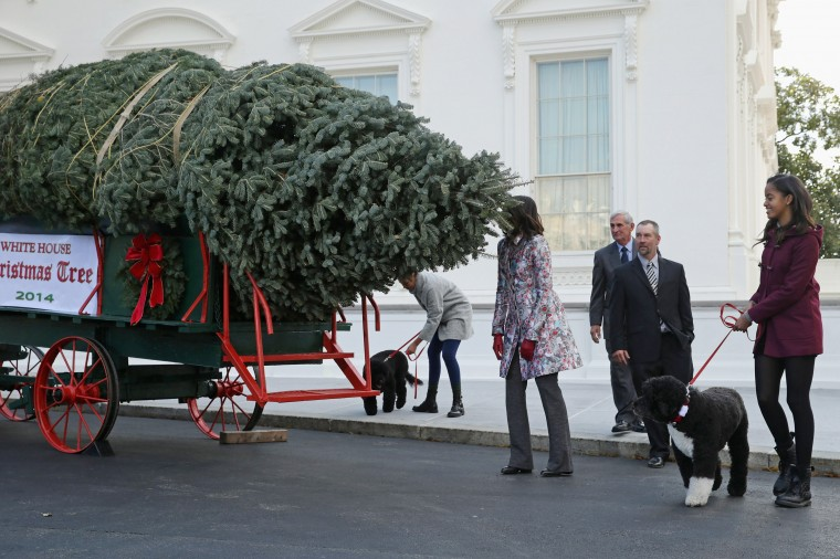U.S. First lady Michelle Obama smells the White House Christmas Tree with her daughters Sasha Obama (L) and Malia Obama and their family dogs, Bo and Sonny, and the tree grower Chris Botek and his father Francis Botek of Lehighton, PA, on the north side driveway of the White House November 28, 2014 in Washington, DC. The 18 1/2 feet tall white fir tree will be displayed in the Blue Room and will be the centerpiece of the White House holiday decorations. (Photo by Chip Somodevilla/Getty Images)