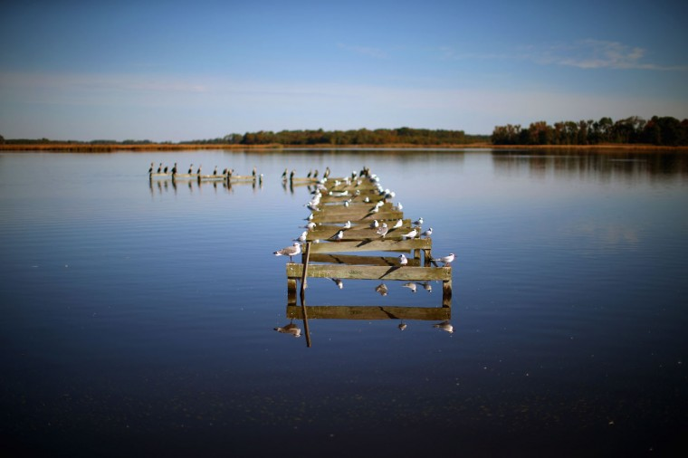 Birds occupy a dilapidated pier on the Little Blackwater River October 9, 2014 in Church Creek, Maryland. Several islands and property's located at sea level in the lower Chesapeake Bay region are slowly eroding away as sea levels rise. Officials have projected the sea level will rise several feet over the next century leaving many of the Chesapeake bay's lower islands underwater. (Photo by Mark Wilson/Getty Images)