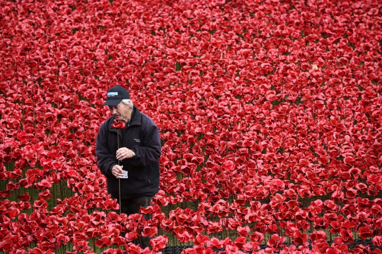 John Mould, who has worked at Hampton Court Palace for over fifty years, removes the first of 888,246 hand-made poppies, representing each of the commonwealth servicemen and women killed in the first world war at Tower of London on November 12, 2014 in London, England. Around five million people are thought to have visited the artwork entitled 'Blood-Swept Lands and Seas of Red' by artist Paul Cummins and Tom Piper and removal is estimated to take 8,000 volunteers around two weeks. (Photo by Carl Court/Getty Images)