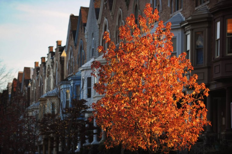 Fall foliage in Baltimore in late afternoon light. (Kenneth K. Lam/Baltimore Sun)
