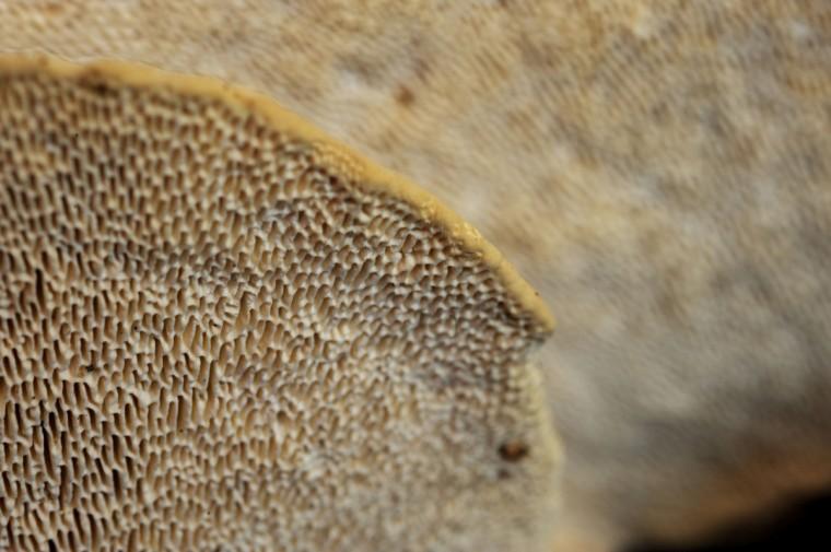 Close up of underside of mushrooms in Herring Run Park. (Kim Hairston/Baltimore Sun)