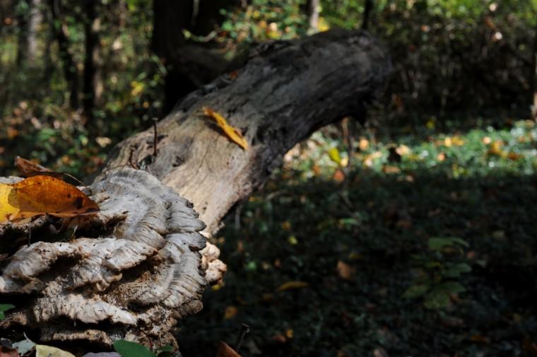 Wild mushrooms in Herring Run Park. (Kim Hairston/Baltimore Sun)