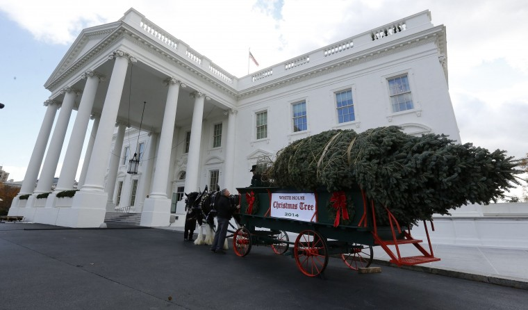 The official White House Christmas tree, from the Crystal Spring Tree Farm in Pennsylvania, sits next to the North Portico of the White House in Washington, November 28, 2014. (Larry Downing/Reuters)