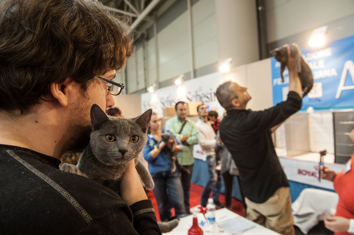 A cat is in the arms of his owner during the first day of the Super Cat Show 2014 in Rome, Italy. The Super Cat Show 2014, which takes place on the 8th and 9th of November, involves the participation of 800 cats of different breeds from all over the world. (Giorgio Cosulich/Getty Images)