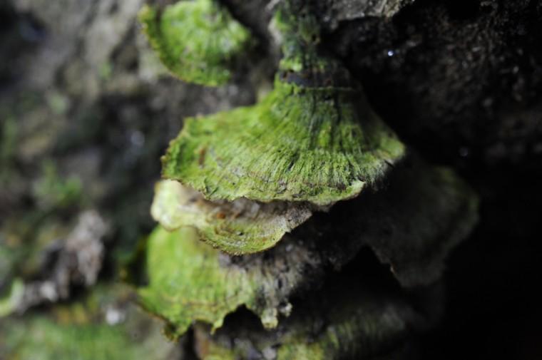 Moss covers wild mushrooms in Herring Run Park. (Kim Hairston/Baltimore Sun)