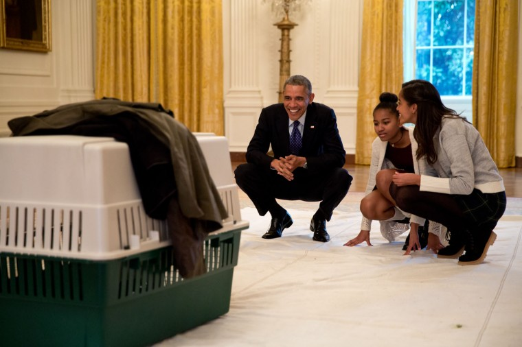 """Nov. 26, 2014 """"The President and his daughters Malia and Sasha look at 'Mac' the turkey in the East Room prior to the annual National Thanksgiving Turkey pardon ceremony at the White House. The President pardoned 'Cheese' publicly, though both 'Mac' and 'Cheese' were spared to live out their life at a farm in Ohio."""" (Official White House Photo by Pete Souza)"""