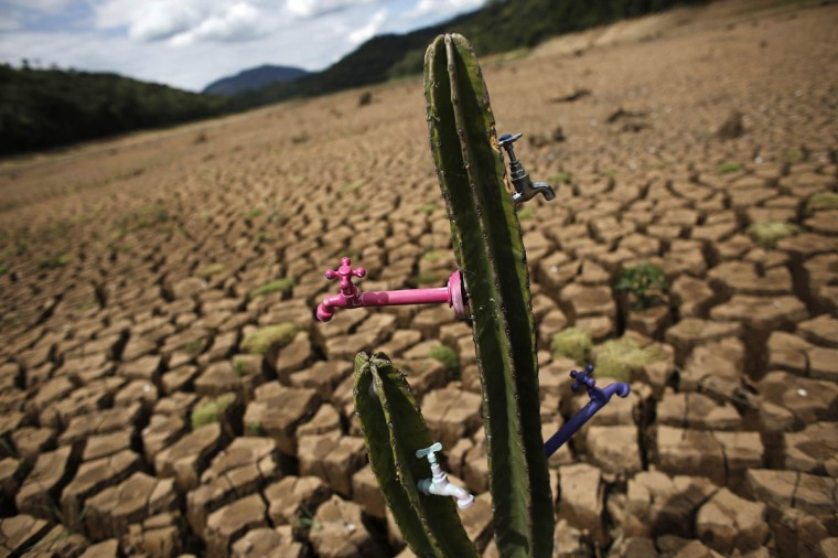 """A drought-related cactus installation called """"Desert of Cantareira"""" by Brazilian artist and activist Mundano is seen at Atibainha dam, part of the Cantareira reservoir, during a drought in Nazare Paulista, Sao Paulo December 2, 2014. Sao Paulo, Brazil's drought-hit megacity of 20 million, has about two months of guaranteed water supply remaining as it taps into the second of three emergency reserves, officials say. (Nacho Doce/Reuters photo)"""
