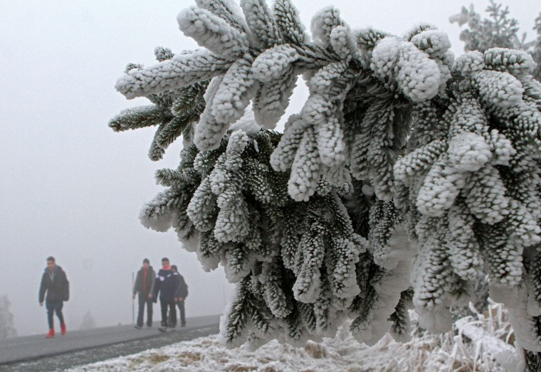 Hikers walk past conifers covered in snow and ice on the Brocken mountain near Schierke, eastern Germany, on December 3, 2014. (Matthias Bein/AFP/Getty Images)
