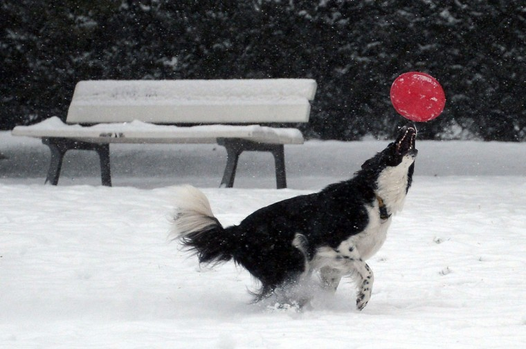 A dog plays with a ball in the Orangerie park covered in snow, on December 30, 2014 in Strasbourg, eastern France. Heavy snowfall brought both chaos and joy across Europe, created idyllic conditions for skiers in France, but also havoc for holidaymakers rushing to and from ski resorts for their end-of-year vacations. (Frederick Florin/AFP/Getty Images)