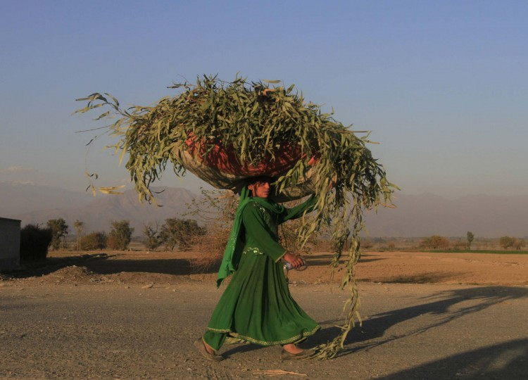 An Afghan woman carries a sack of grass on her head along a road in Nangarhar province, December 2, 2014. (REUTERS/ Parwiz)