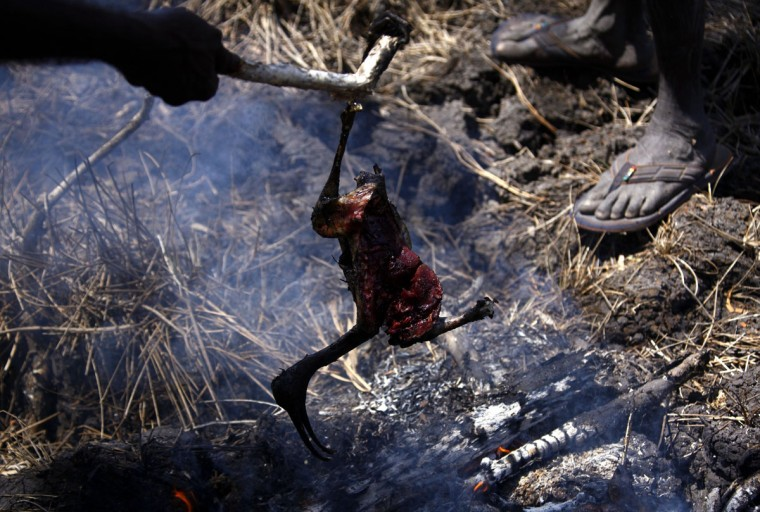 Australian Aboriginal hunters Bruce and Robert Gaykamangu of the Yolngu people cook a Magpie Goose they just shot near the 'out station' of Ngangalala, located on the outskirts of the community of Ramingining in East Arnhem Land. (David Gray/Reuters)