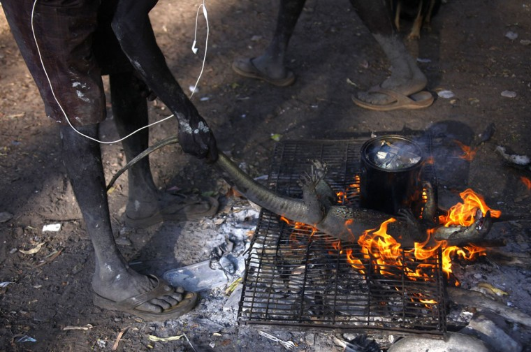 Australian Aboriginal hunter Roy Gaykamangu of the Yolngu people places a native Australian lizard called a Goanna on a fire to cook it at the 'out station' of Yathalamarra, located on the outskirts of the community of Ramingining in East Arnhem Land. (David Gray/Reuters)