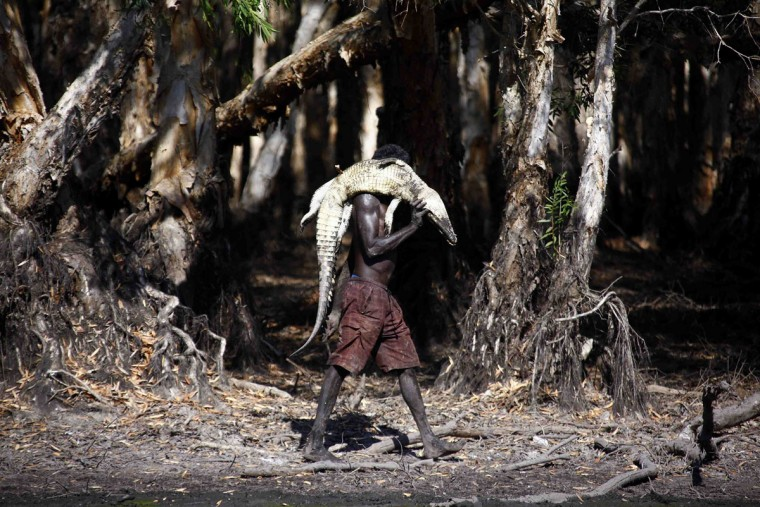 Australian Aboriginal hunter Roy Gaykamangu of the Yolngu people carries a crocodile he has just shot dead along the edge of a billabong near the 'out station' of Yathalamarra, located on the outskirts of the community of Ramingining in East Arnhem Land. (David Gray/Reuters)