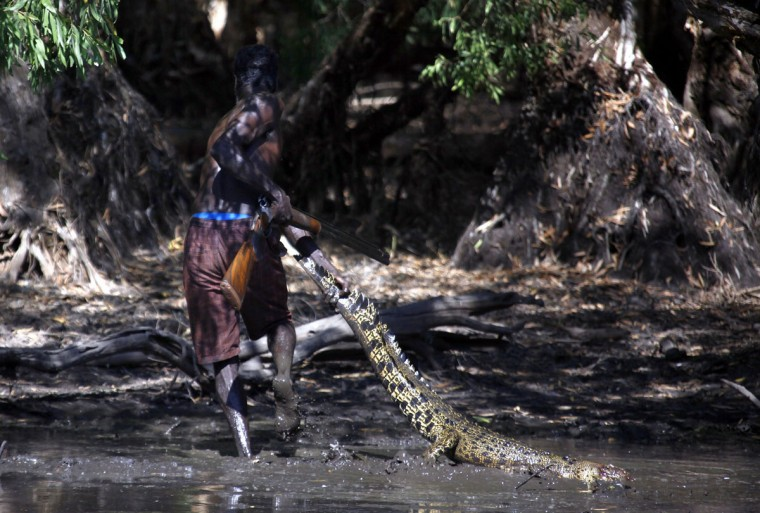 Australian Aboriginal hunter Roy Gaykamangu of the Yolngu people drags a crocodile he has just shot dead out of a billabong near the 'out station' of Yathalamarra, located on the outskirts of the community of Ramingining in East Arnhem Land. (David Gray/Reuters)