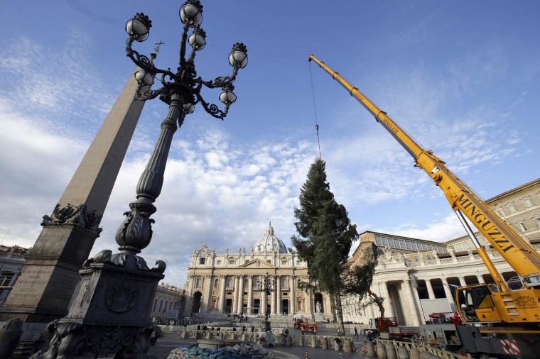 Workers erect a Christmas tree in St. Peter's Square at the Vatican December 4, 2014. The 70-year-old Christmas tree was donated by the southern Italian region of Calabria. REUTERS/Max Rossi
