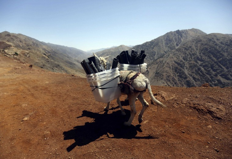 A donkey transports ballot boxes and other election material on to polling stations which are not accessible by road in Shutul, Panjshir province, in this June 13, 2014 file photo. REUTERS/Omar Sobhani/Files