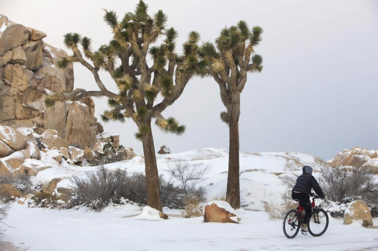 A camper rides a bicycle through a snow-coverd campground following a winter storm in Joshua Tree National Park, California December 31, 2014. Two people, including a harbor patrolman, died on a wind-beaten Southern California coastal island and emergency crews rescued more than 100 drivers trapped in the snow-caked mountains outside Los Angeles in the wake of the storm. (Lee Celano/Reuters photo)