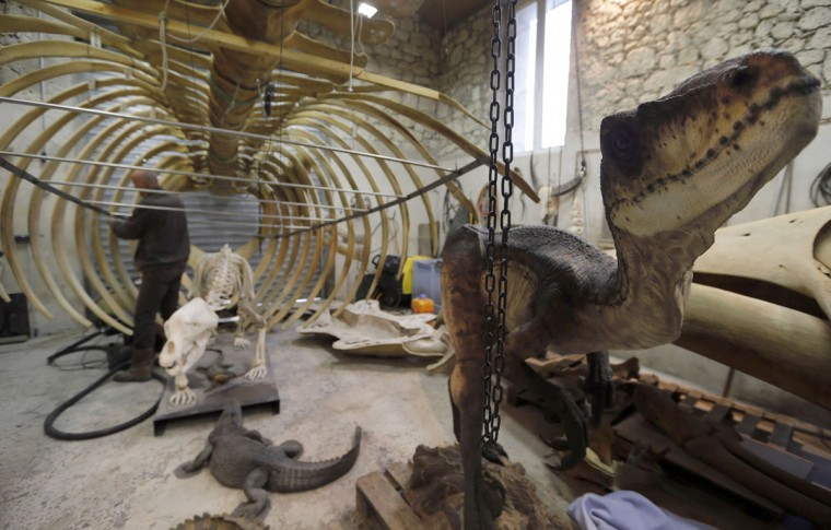 Emmanuel Janssens Casteels, a Belgian animal sculptor, looks at a replica of a whale skeleton as he works in his workshop in Prayssas December 3, 2014. Casteels' company OPHYS specializes in life-size reconstructions and the sculpting or moulding reproductions of animals and hyper-realist fossils. His reconstructions are exhibited in museums and theme parks. (REUTERS/Regis Duvignau)