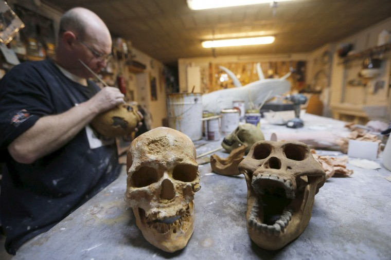 A worker paints a replica of cro-magnon skulls in the workshop of Belgian animal sculptor Emmanuel Janssens Casteels, in Prayssas December 3, 2014. Casteels' company OPHYS specializes in life-size reconstructions and the sculpting or moulding reproductions of animals and hyper-realist fossils. His reconstructions are exhibited in museums and theme parks. (REUTERS/Regis Duvignau)