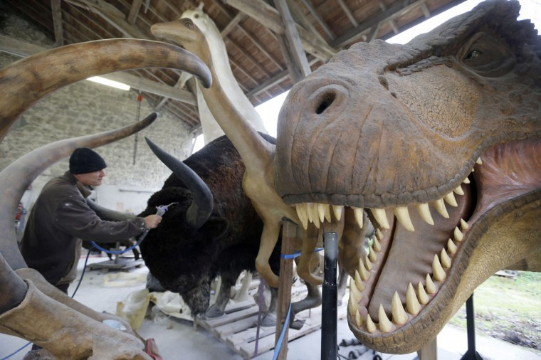 Belgian animal sculptor Emmanuel Janssens Casteels works on replicas of Bison and Tyrannosaurus in his workshop in Prayssas December 3, 2014. Casteels' company OPHYS specializes in life-size reconstructions and the sculpting or moulding reproductions of animals and hyper-realist fossils. His reconstructions are exhibited in museums and theme parks. (REUTERS/Regis Duvignau)