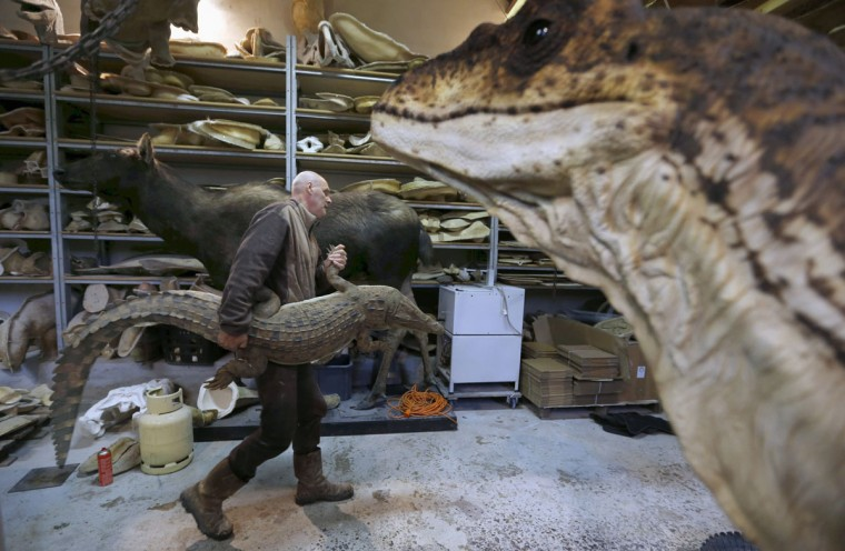 Belgian animal sculptor Emmanuel Janssens Casteels holds a replica of a prehistoric crocodile in his workshop in Prayssas December 3, 2014. Casteels' company OPHYS specializes in life-size reconstructions and the sculpting or moulding of reproductions of animals and hyper-realistic fossils. His reconstructions are exhibited in museums and theme parks. (REUTERS/Regis Duvignau)