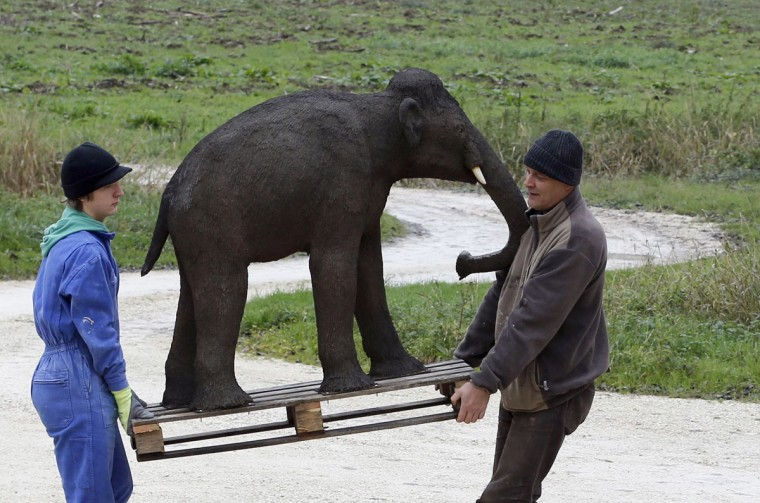 Belgian animal sculptor Emmanuel Janssens Casteels (right) and a worker carry a replica of young mammoth, as they work in their workshop in Prayssas December 3, 2014. Casteels' company OPHYS specializes in life-size reconstructions and the sculpting or moulding of reproductions of animals and hyper-realistic fossils. His reconstructions are exhibited in museums and theme parks. (REUTERS/Regis Duvignau)