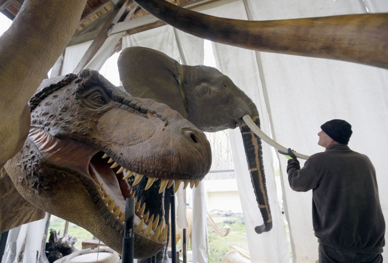 Belgian animal sculptor Emmanuel Janssens Casteels works on replicas of an elephant and a Tyrannosaurus dinosaur in his workshop in Prayssas December 3, 2014. Casteels' company OPHYS specializes in life-size reconstructions and the sculpting or moulding of reproductions of animals and hyper-realistic fossils. His reconstructions are exhibited in museums and theme parks. (REUTERS/Regis Duvignau)