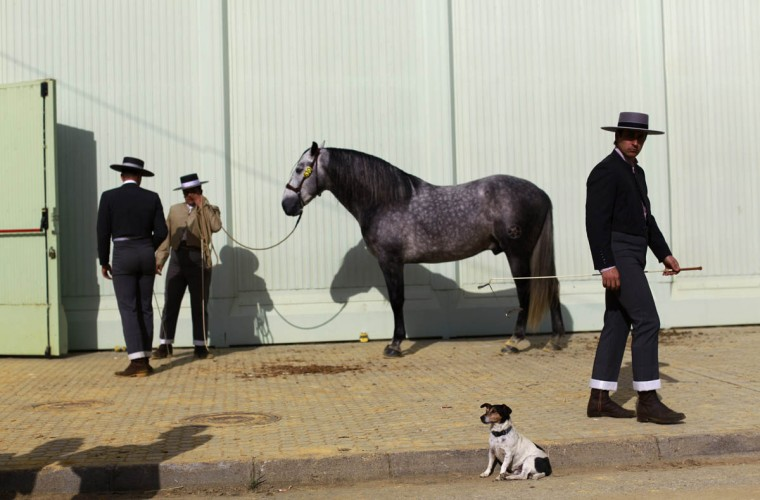 Andalusian horsemen wait before taking part in a morphological contest for colts of three years during the Sicab International Pre Horse Fair in the Andalusian capital of Seville December 3, 2014. The show runs till December 7 and is dedicated in full and exclusively to the purebred Spanish horse, to offer visitors a wide range of examples of breed versatility for their enjoyment. (Marcelo del Pozo/Reuters photo)